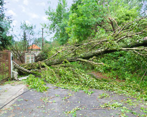Expert Tree Removal Service – Live Tension Free